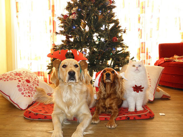 Christmas Clothing For Your Pet