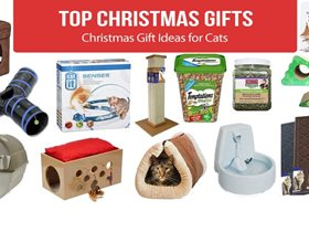 Best Christmas Gift Ideas for Cats 2019